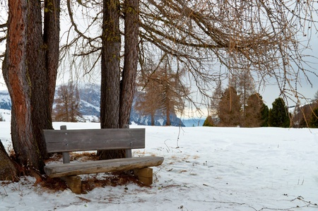 Isolated wooden bench with trees on snow scape in dolomiti in winter, Alps photo