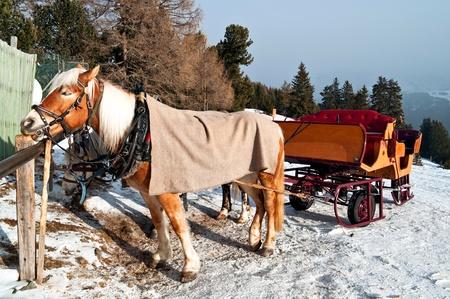 snow horse sledge in winter, Ortisei, dolomiti, Italy photo
