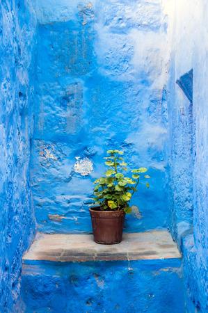 medioeval: Flower pot in Santa Catalina Monastery in Arequipa