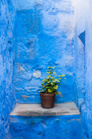 catalina: Flower pot in Santa Catalina monastery, in Arequipa