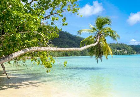 frutas tropicales: Palmera en una hermosa playa tropical, Mahe, Seychelles Foto de archivo
