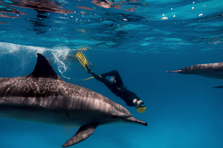 Female freediver with dolphins in Red sea
