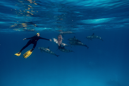 Girl freediver together with dolphins in Red sea Stock Photo