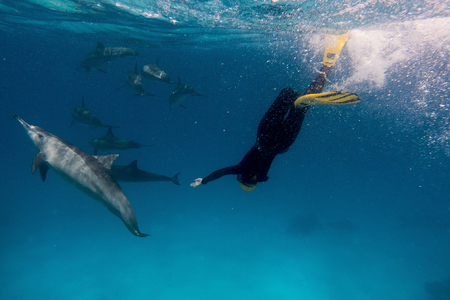 Female freediver together with dolphins in Red sea