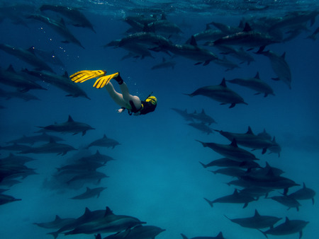 A young woman in the big school of dolphins