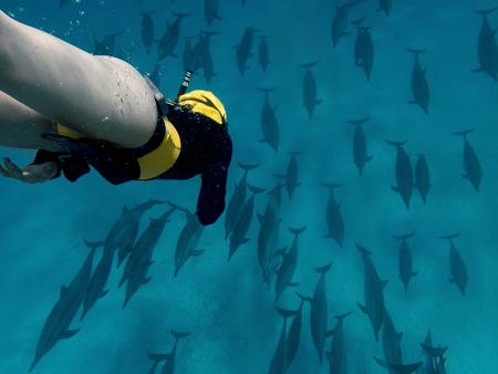 A moman freediver in the big school of dolphins