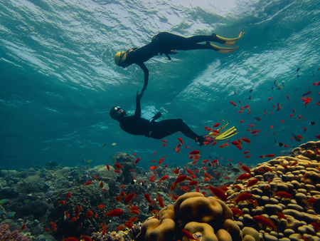 Freediver couple looking at the coral reef 스톡 콘텐츠