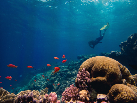 Beautiful Coral reef and a freediver
