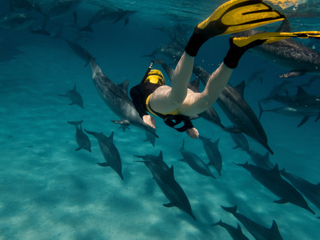 A young women free diving with dolphins