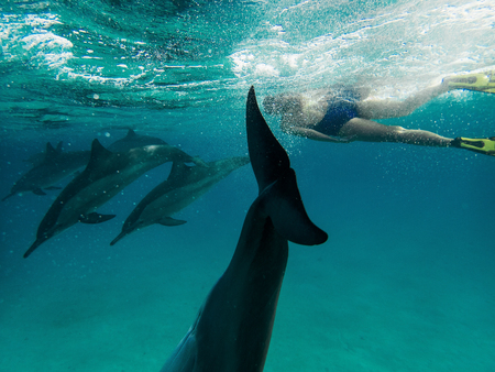 A moman freediver with the school of dolphins 스톡 콘텐츠