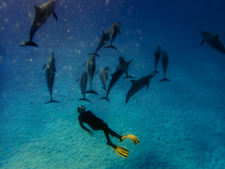 A freediver together with dolphins in Red sea