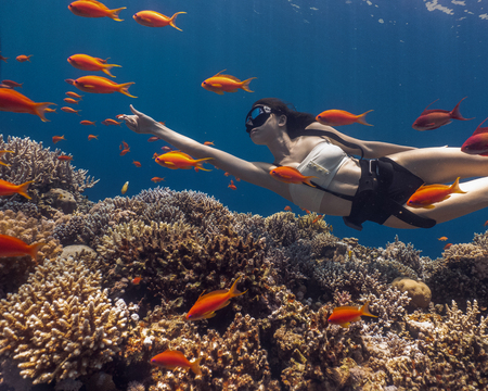 Asian woman freediving in amazing vivid coral reef 스톡 콘텐츠