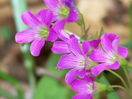 closeups: Spring Close-ups