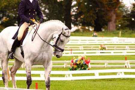 Woman competing in a dressage competition Stock Photo