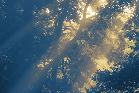 Sunlight shining through trees on an early misty morning with toning Imagens