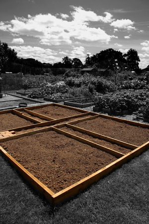 Allotment plot marked out ready for planting with a wooden frame in a community garden. With selective colour 版權商用圖片