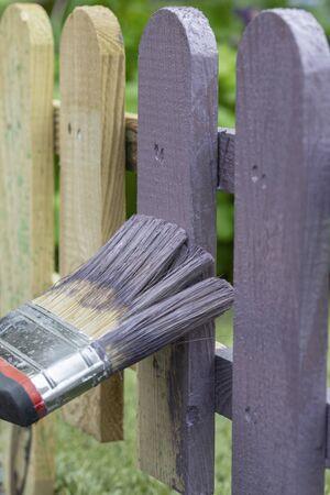 Man painting a wooden picket fence with purple wood stain and brush in a garden 写真素材