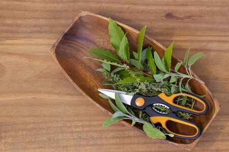 Mixed herbs with scissors in a wooden bowl with sage, thyme, mint and bay leaves.  On a wooden background