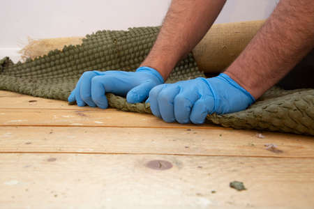 Man pulling up and removing carpet underlay from a wooden floor.  Home interior do it yourself refurbishment project 写真素材