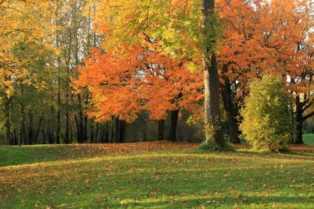 Herbstsaison, NW Orego Standard-Bild - 9639305