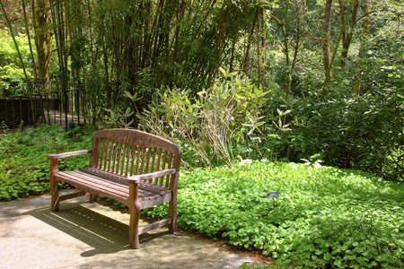 Outdoor bench & nature. Stock Photo - 9640548