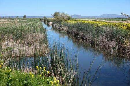 pantanos: Pantanos en el sur de Oreg�n.