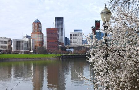 First sign of Spring, Portland Oregon.