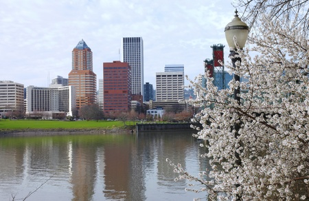 Fist sign of Spring blooms in Portland Oregon. Imagens - 11129198