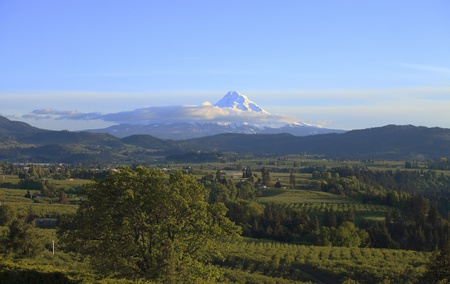 Mt. Hood and Hood River valley at sunset Oregon. photo