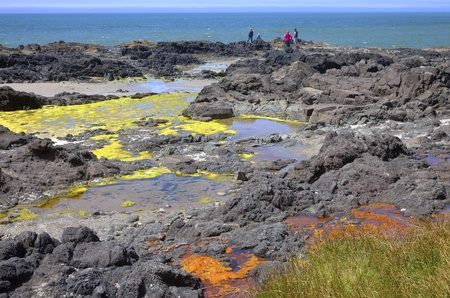 Lava beds colorful algae, Cape Perpetua Oregon coast  photo