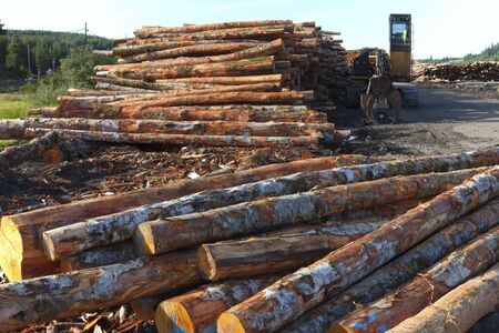Graded lumber piles ready for export, Coos Bay Oregon  photo