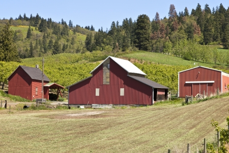 Barns and field in Hood River county Oregon  Stock Photo
