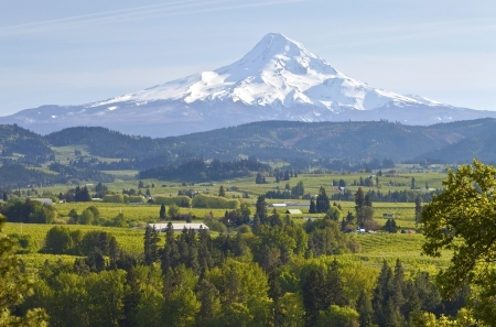 Mt  Hood and Hood River valley in Spring Oregon