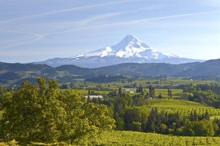 Mt  Hood and Hood River valley in Spring Oregon  photo