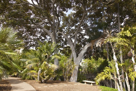 balboa: Balboa park gardens tropical jungle in San Diego California