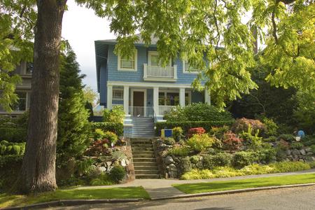 residential neighborhood: Un gran �rbol en un barrio residencial de Seattle WA