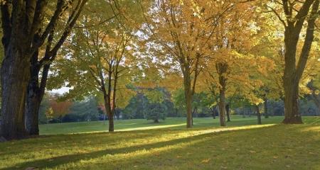 public park: Parque p�blico panorama en oto�o los colores Gresham OR Foto de archivo