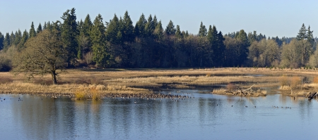 Tualatin national wildlife and refuge panorama Oregon  photo