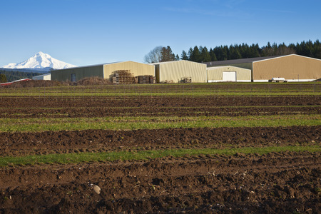 mt  hood: Mt. Hood overshadowing field and warehouses rural Oregon.
