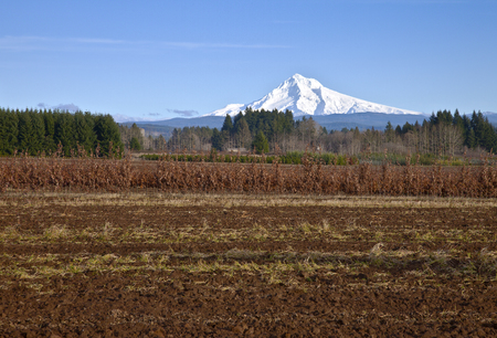 mt  hood: Mt. Hood in snow and farmland rural Oregon.