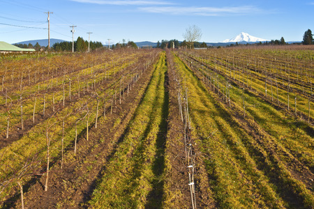 agrarian: Landscape of new planted trees in a farm rural Oregon.