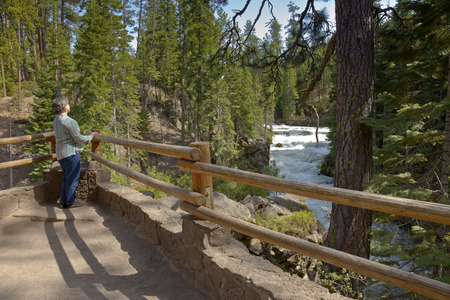 ponderosa pine: Enjoying the view of the river flow in central Oregon. Stock Photo