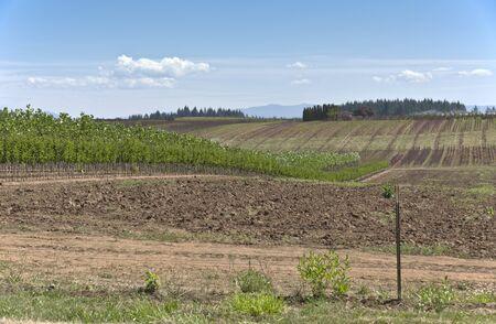 Plant agriculture and nursery near Sandy Oregon. Stock fotó - 41548094
