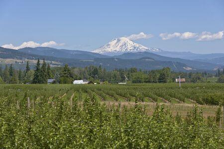 nurseries: Mt Adams and the Hood River valley landscape Oregon.
