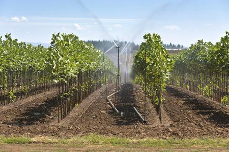 nursery: La agricultura vegetal y guardería cerca de Sandy Oregon.