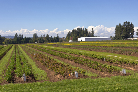 nurseries: Agriculture and plants in a field rural Oregon.