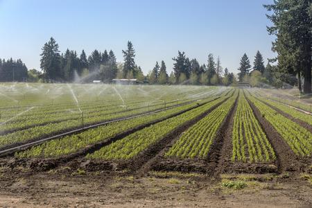 Watering plants with sprinklers in rural Oregon.