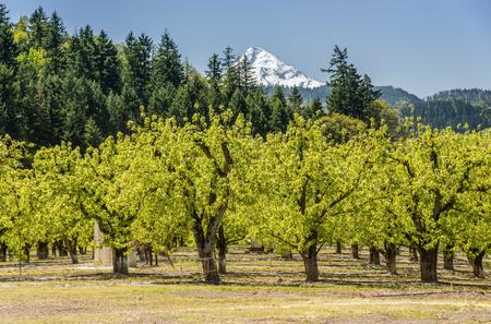 Hood River farmlands and landscape in Oregon state.