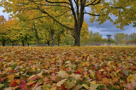 Fallen leaves colorful carpet of nature Oregon state.