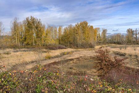 Autumn colors in a field near Troutdale Oregon.